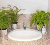 بهترین گل و گیاهان مناسب برای دکوراسیون سرویس بهداشتی | دکوراسیون داخلی خانه | طراحی داخلی